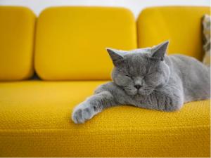 Mačkam prijazno okolje
