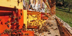 Javni razpisi za čebelarje
