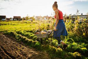 Javni razpis - Pomoč za zagon dejavnosti, namenjene razvoju majhnih kmetij